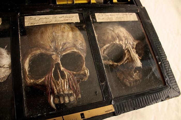 mysterious-skulls-skeletons-thomas-theodore-merrylin-home-london-11