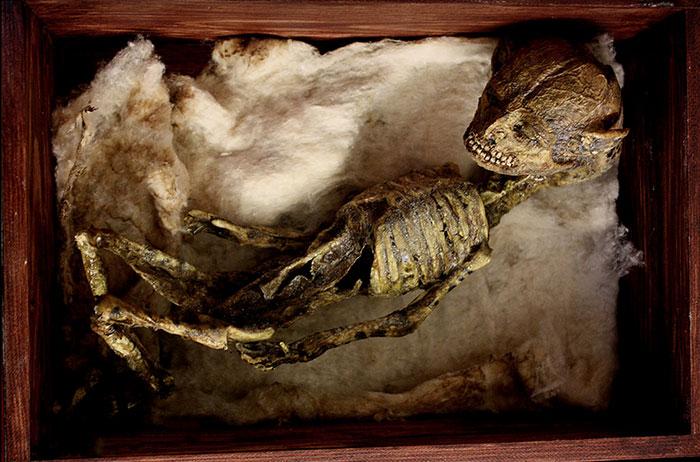 mysterious-skulls-skeletons-thomas-theodore-merrylin-home-london-4