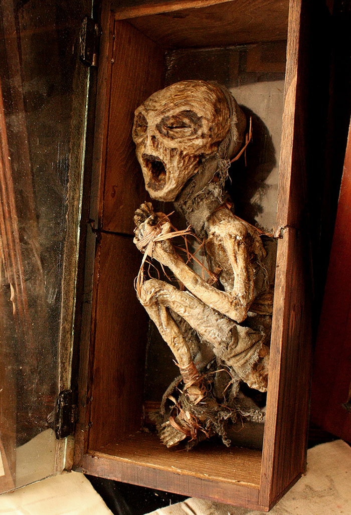 mysterious-skulls-skeletons-thomas-theodore-merrylin-home-london-6