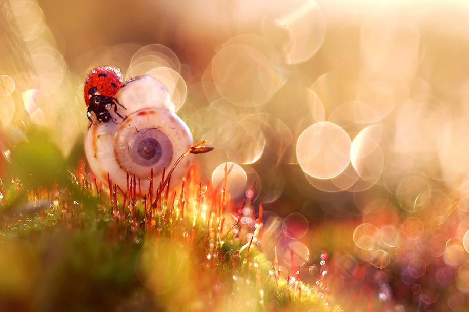 nature-wonderland-photography-magda-wasiczek-poland-12
