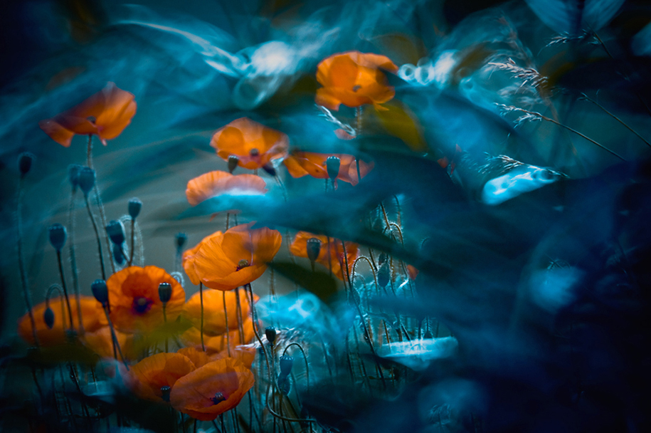 nature-wonderland-photography-magda-wasiczek-poland-13