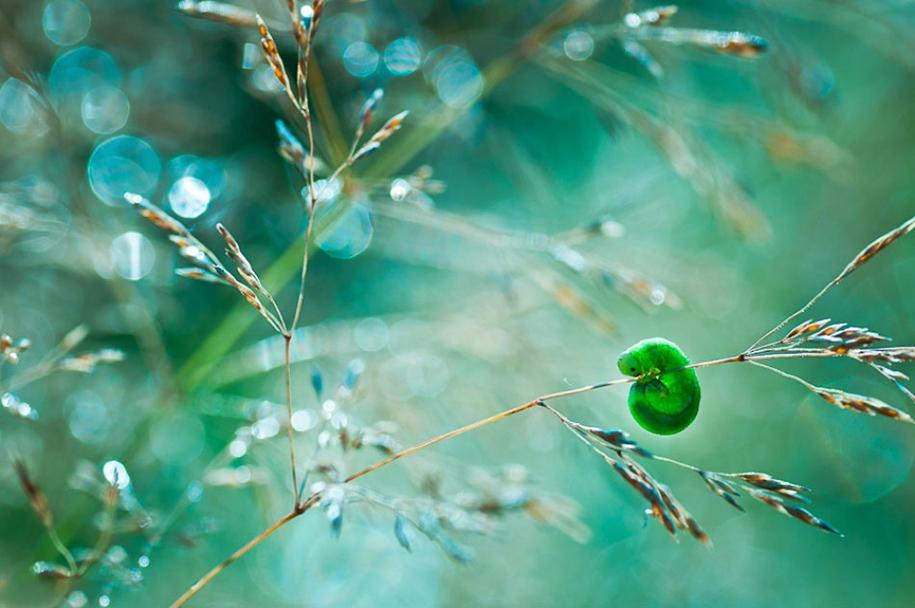 nature-wonderland-photography-magda-wasiczek-poland-2