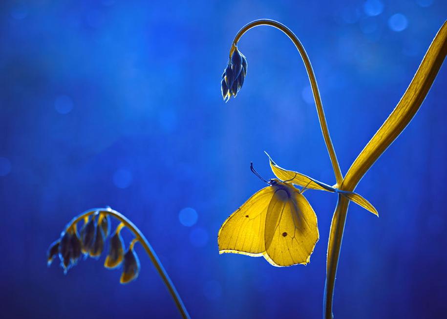 nature-wonderland-photography-magda-wasiczek-poland-6