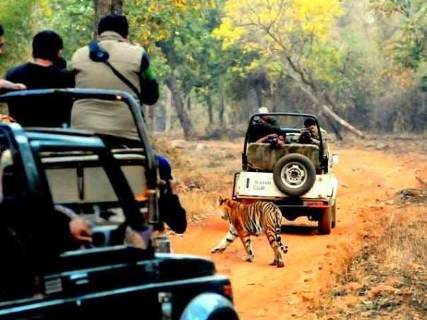 People enjoying the Sighting Bandhavgarh Park