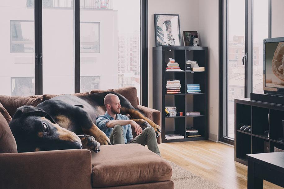 vivian-dachshund-giant-wiener-dog-photoshop-mitch-boyer-2