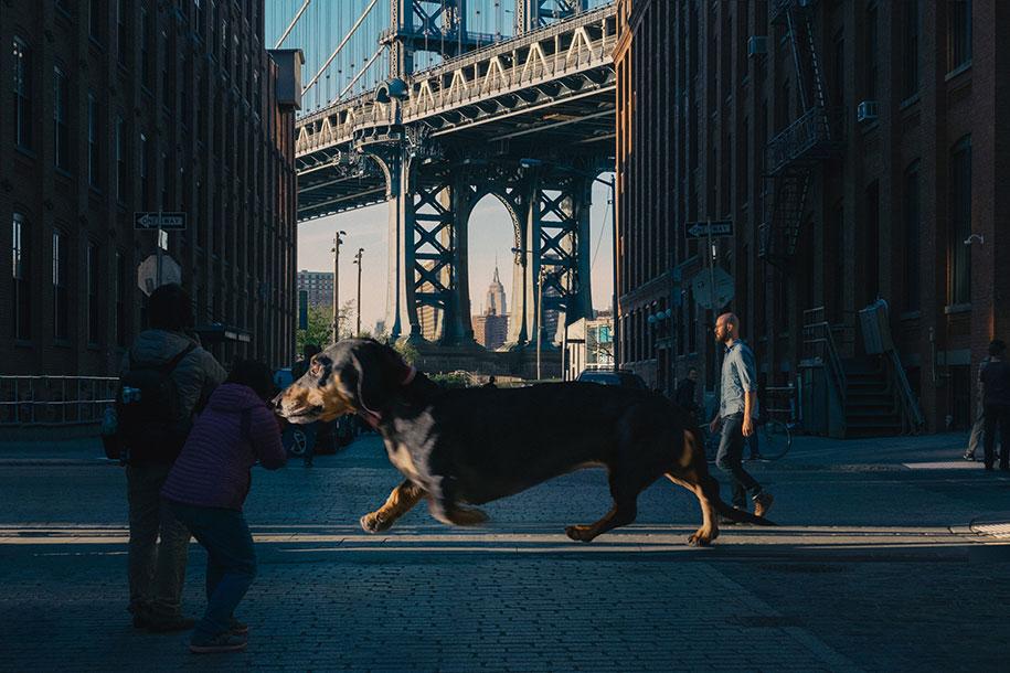 vivian-dachshund-giant-wiener-dog-photoshop-mitch-boyer-6