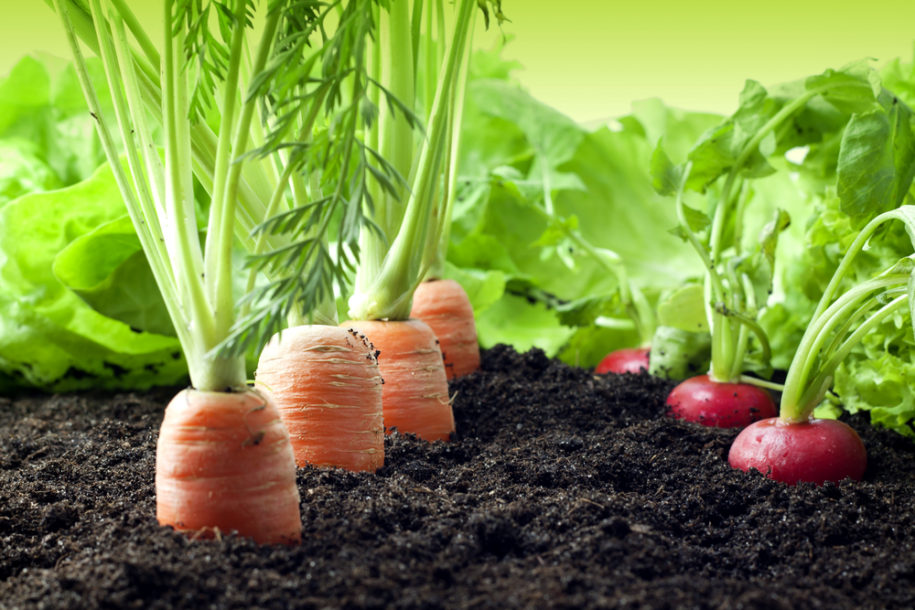 Planting Organic Vegetables In Your Garden