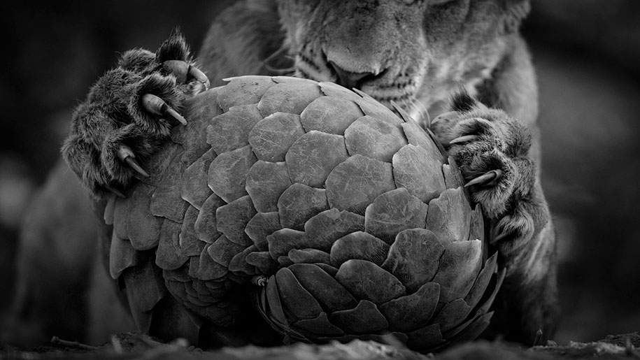 best-wildlife-photographer-of-the-year-2016-national-history-museum-11