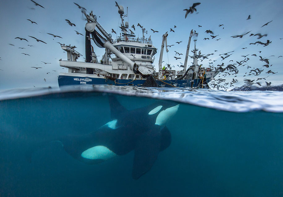 best-wildlife-photographer-of-the-year-2016-national-history-museum-8