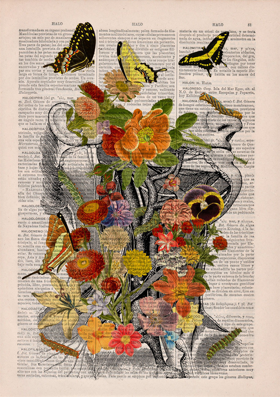floral-anatomy-illustrations-old-book-pages-prrint-15