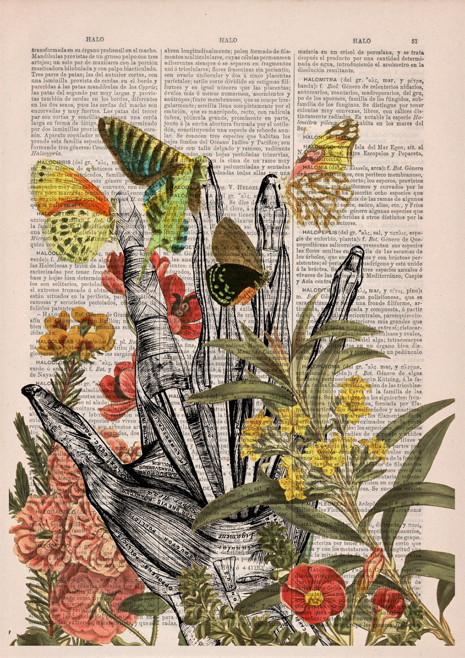 floral-anatomy-illustrations-old-book-pages-prrint-16