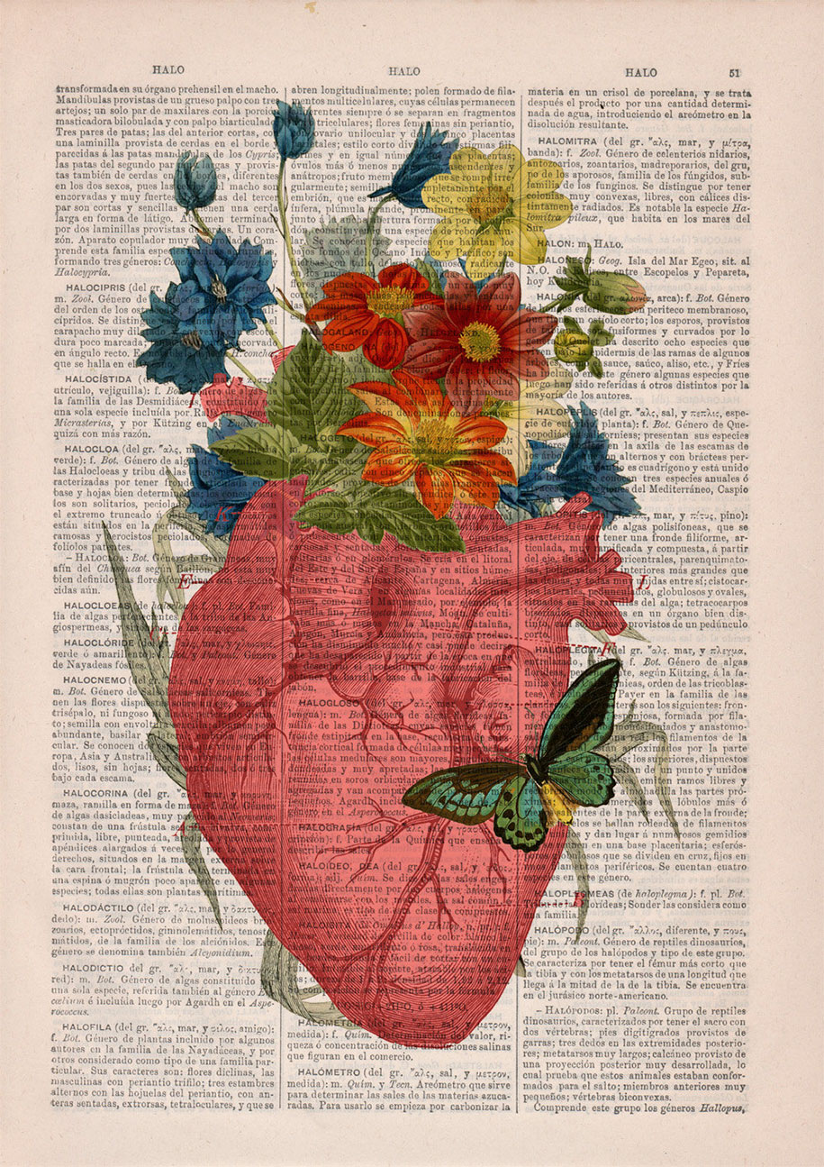 floral-anatomy-illustrations-old-book-pages-prrint-7
