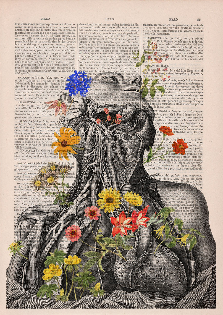 floral-anatomy-illustrations-old-book-pages-prrint-8