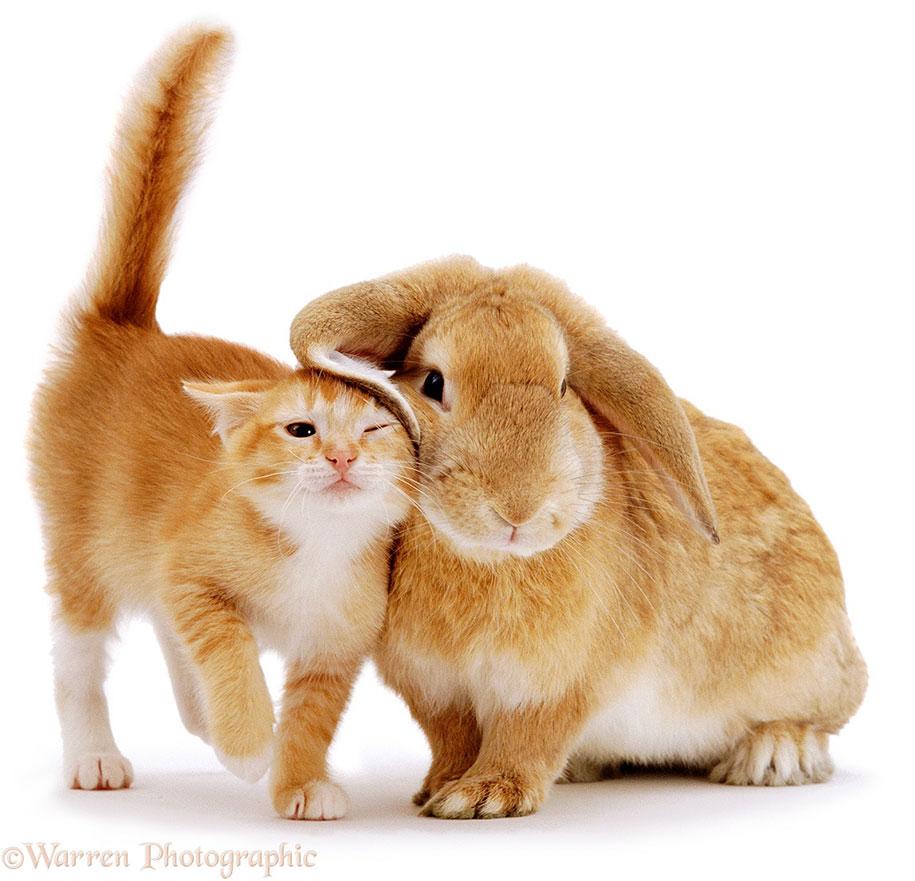 pet-twins-matching-animals-warren-photographic-1