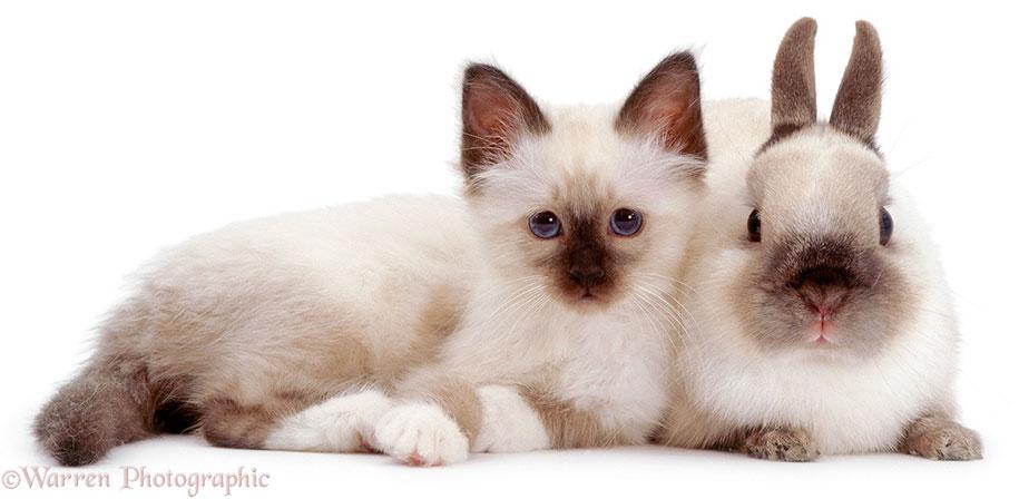 pet-twins-matching-animals-warren-photographic-12