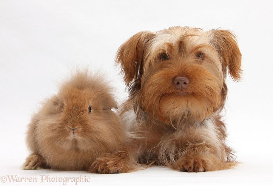 pet-twins-matching-animals-warren-photographic-13