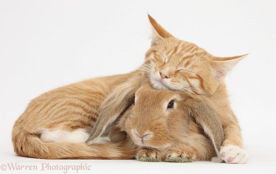 pet-twins-matching-animals-warren-photographic-22