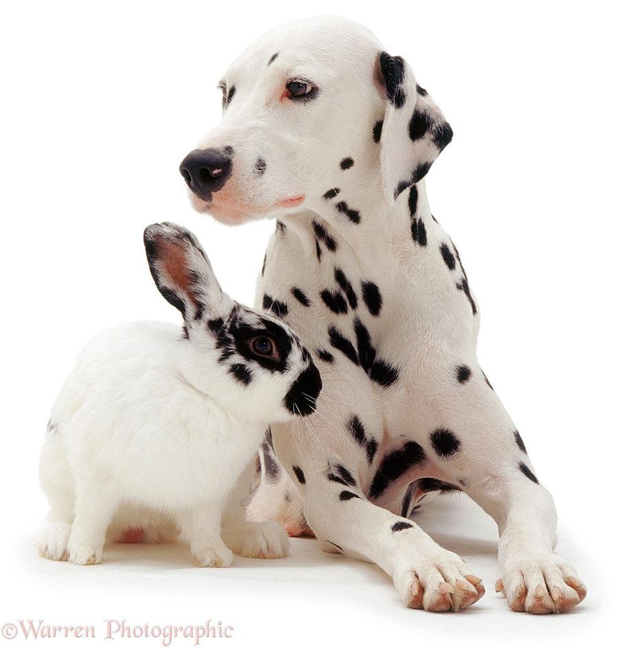 pet-twins-matching-animals-warren-photographic-23