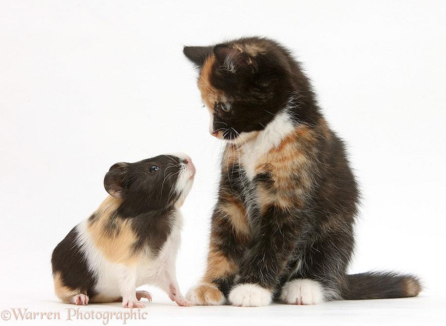 pet-twins-matching-animals-warren-photographic-25
