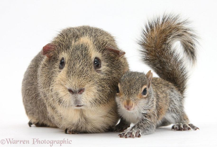 pet-twins-matching-animals-warren-photographic-28