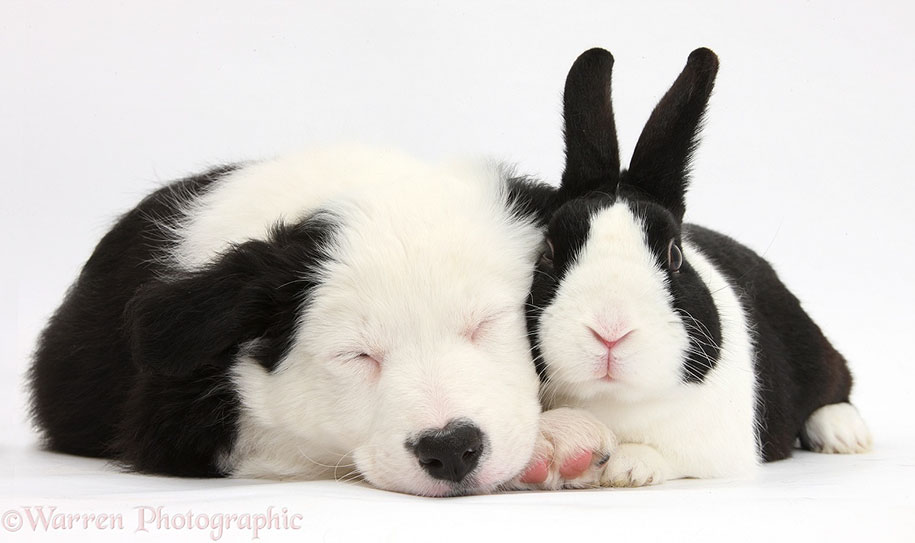 pet-twins-matching-animals-warren-photographic-35
