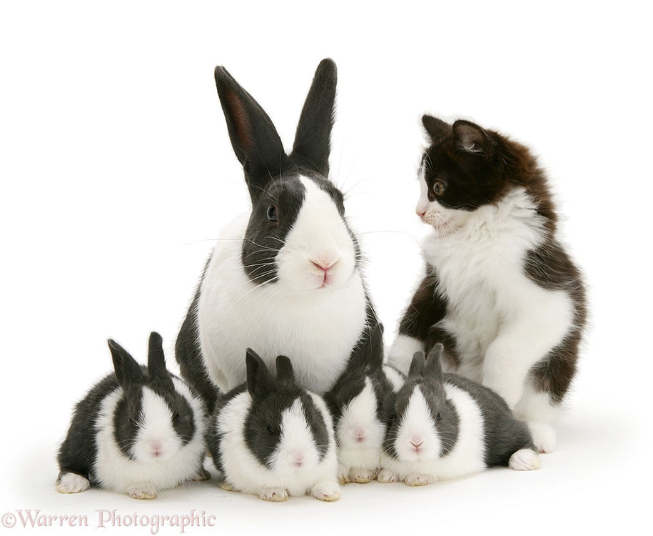 pet-twins-matching-animals-warren-photographic-5