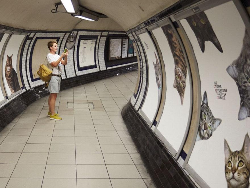 subway-cat-ads-metro-london-underground-1
