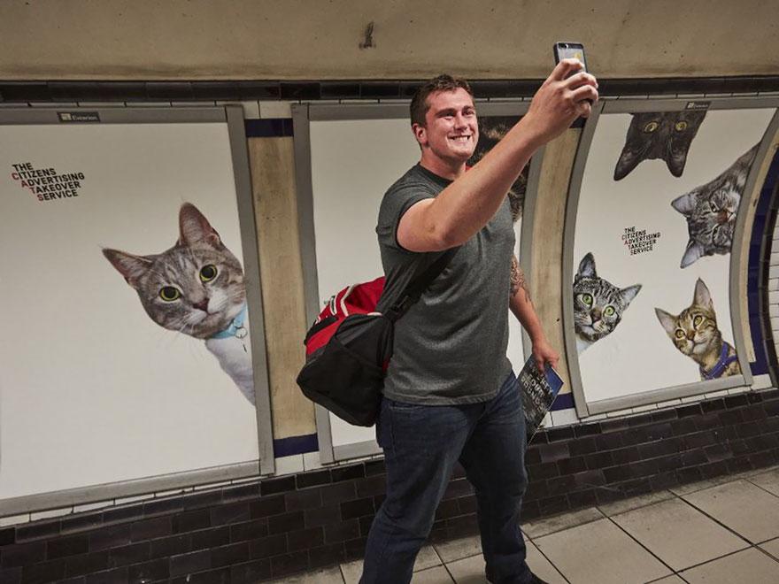 subway-cat-ads-metro-london-underground-11
