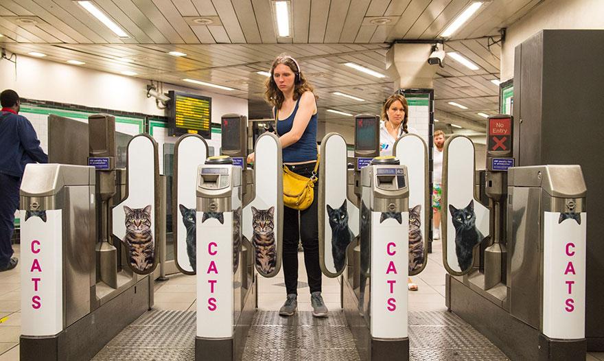 subway-cat-ads-metro-london-underground-2