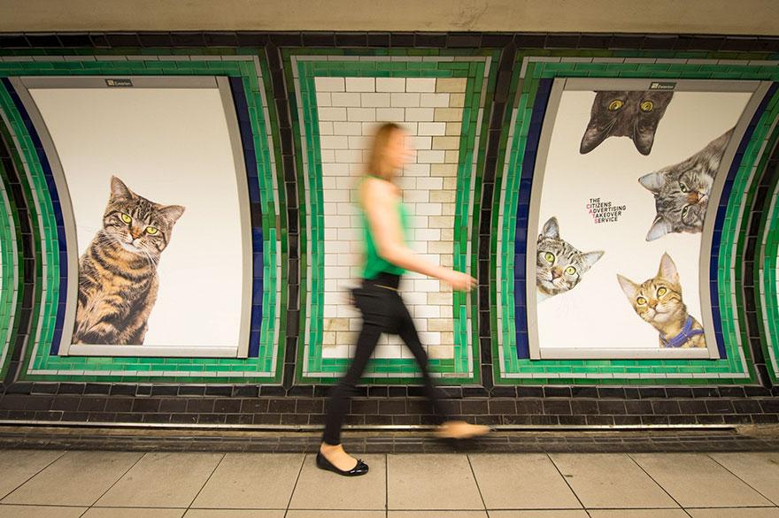 subway-cat-ads-metro-london-underground-3
