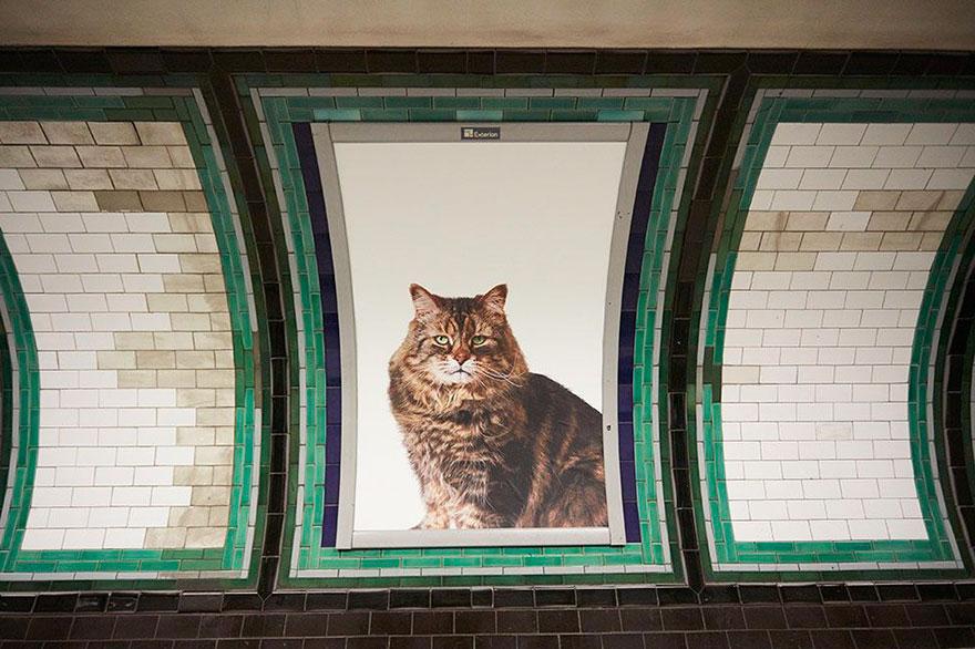 subway-cat-ads-metro-london-underground-5