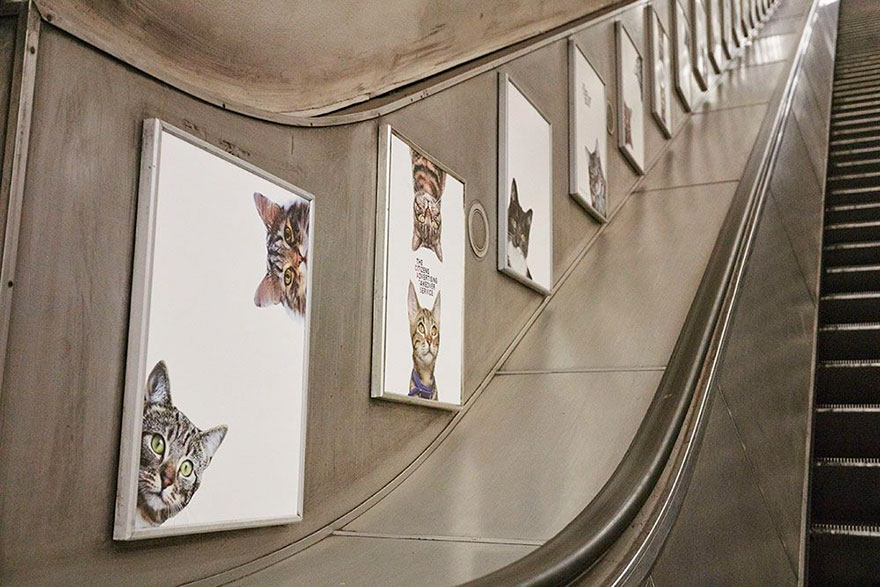 subway-cat-ads-metro-london-underground-7