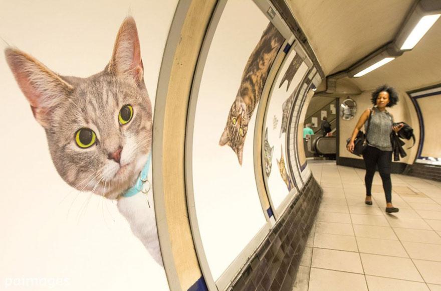 subway-cat-ads-metro-london-underground-9