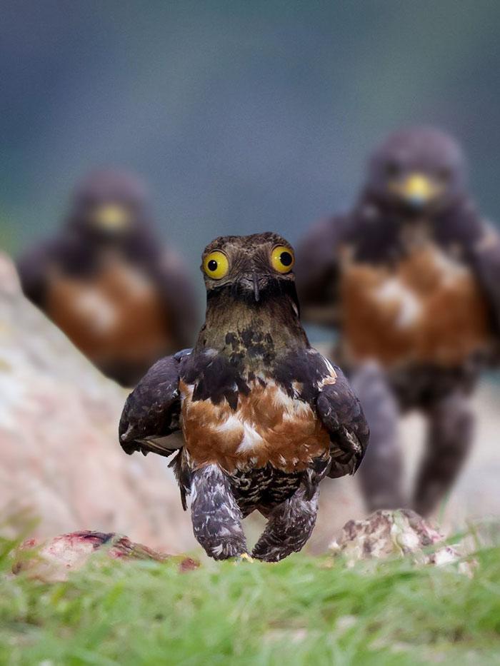 funny-badass-hawk-photoshop-battle-8
