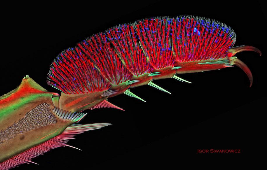 insect-microscope-photography-igor-siwanowicz-4