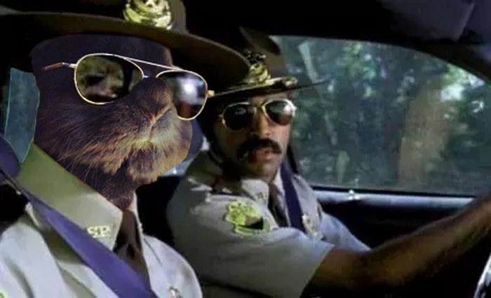 sunglasses-rabbit-photoshop-battle-1