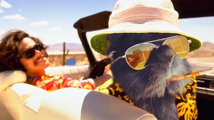 sunglasses-rabbit-photoshop-battle-2