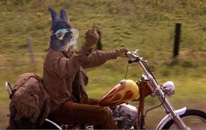 sunglasses-rabbit-photoshop-battle-4