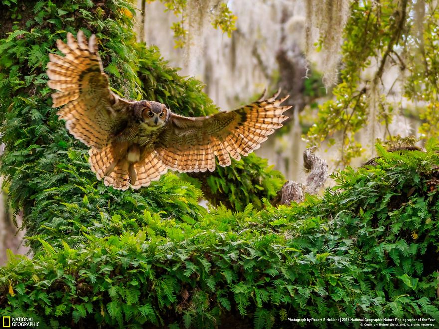 2016-national-geographic-nature-photographer-of-the-year-finalists-1
