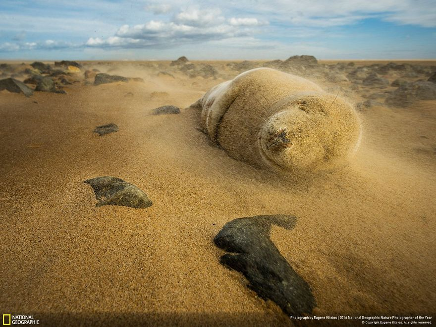 2016-national-geographic-nature-photographer-of-the-year-finalists-15