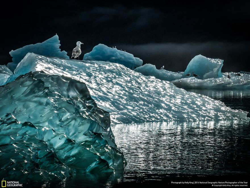 2016-national-geographic-nature-photographer-of-the-year-finalists-8