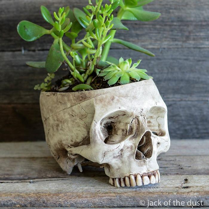 decorative-skulls-jack-dust-andrew-firth-28