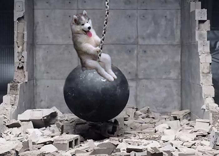 husky-puppy-tree-photoshop-battle-12