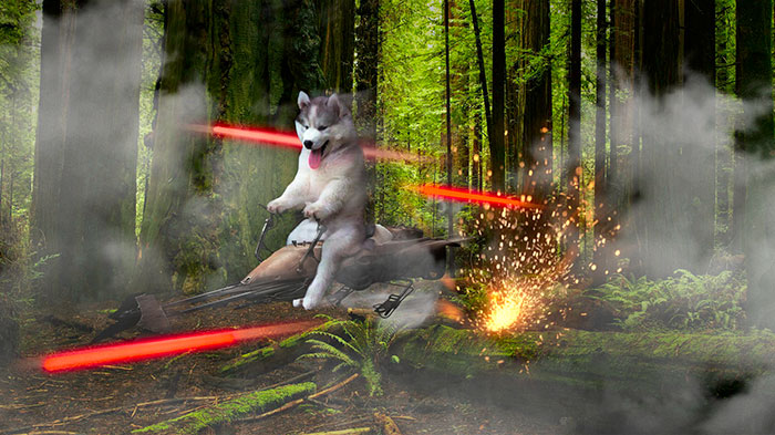husky-puppy-tree-photoshop-battle-13