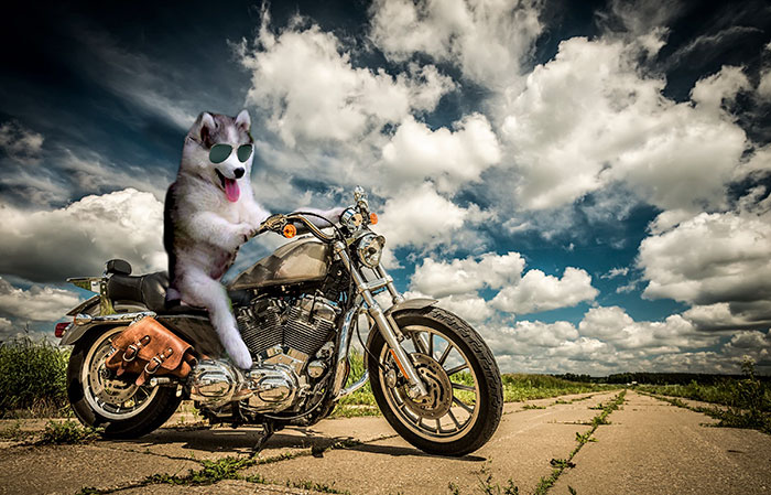 husky-puppy-tree-photoshop-battle-15