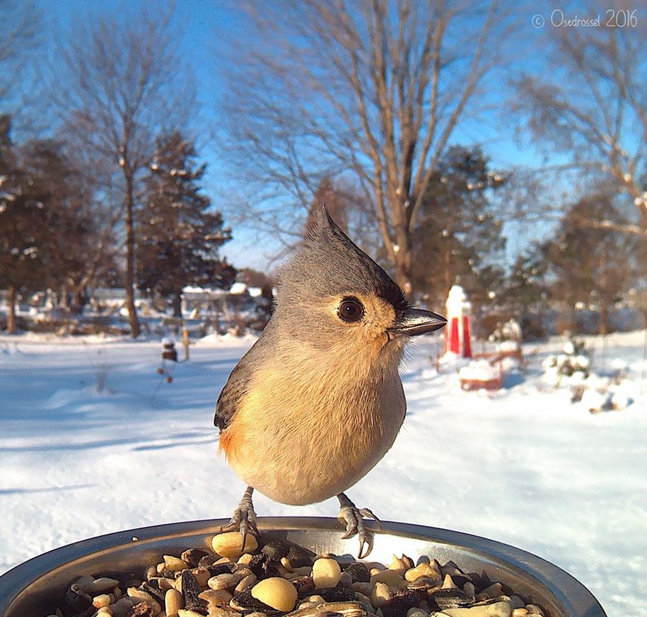 bird-feeder-camera-birds-photos-lisa-ca-10