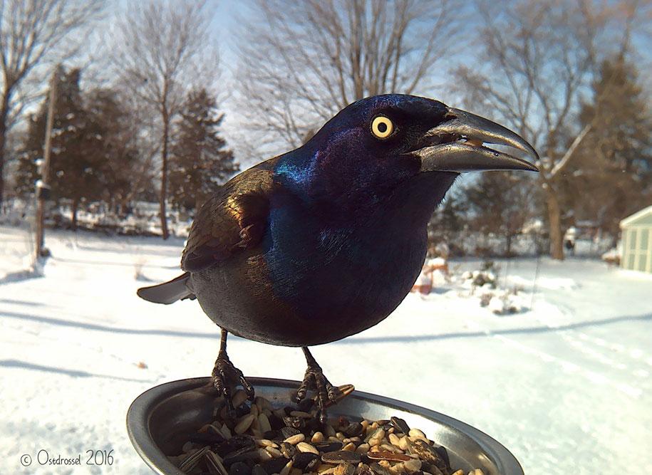 bird-feeder-camera-birds-photos-lisa-ca-2