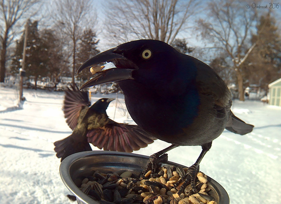 bird-feeder-camera-birds-photos-lisa-ca-4