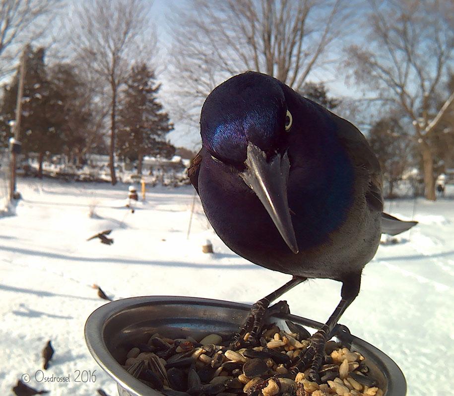 bird-feeder-camera-birds-photos-lisa-ca-5