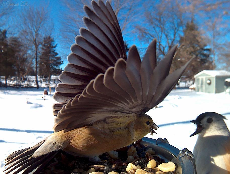 bird-feeder-camera-birds-photos-lisa-ca-7